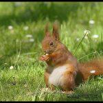 Permis de chasse à l'écureuil illégalement en vente sur le darkweb