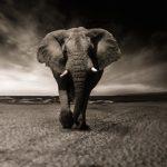 Les animaux disparaîtraient à un rythme alarmant