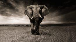 Les animaux disparaissent à un rythme alarmant