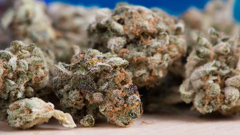 kilos de cannabis