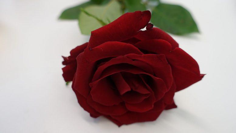 Hubert Lenoir se serait enfoncé une demie-douzaine de roses dans la gorge